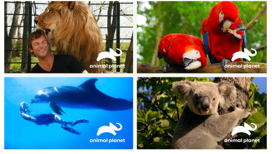 Animal Planet Mockups